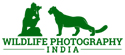 Wildlife Photography India