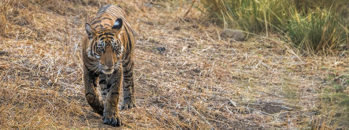 Wildlife Photography India