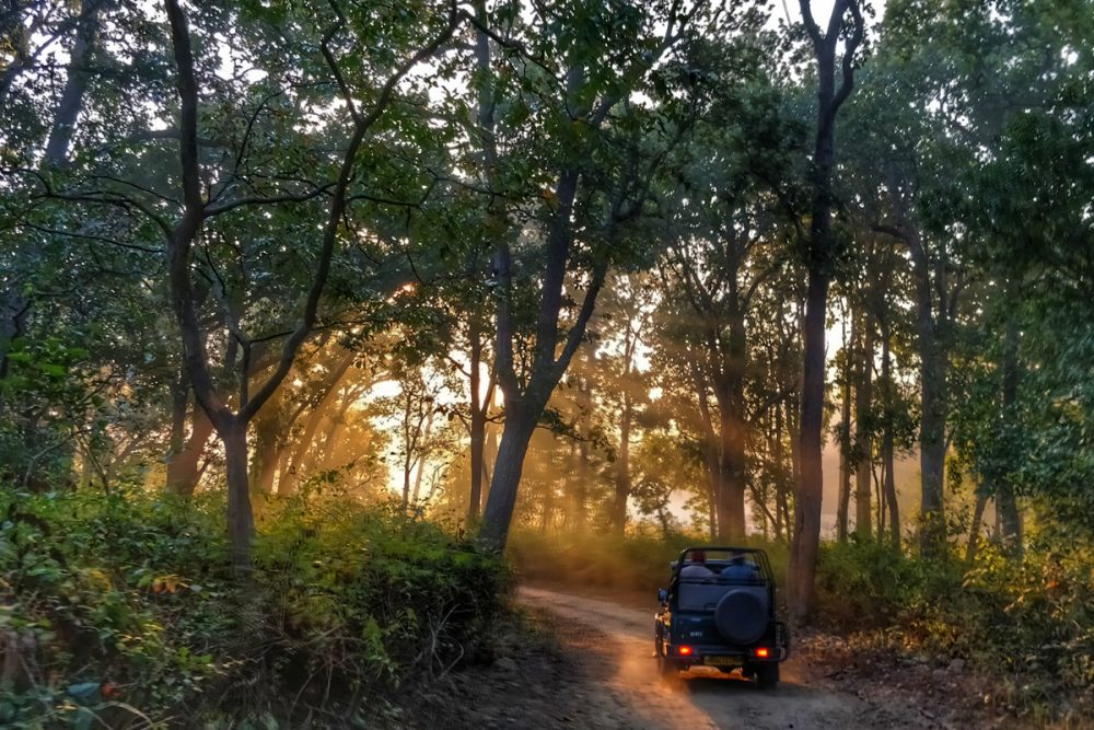 jeep safari through forest, India